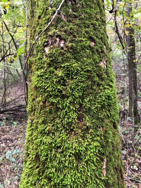 Moss: one of my favorite things. Had I known I could have made a career…